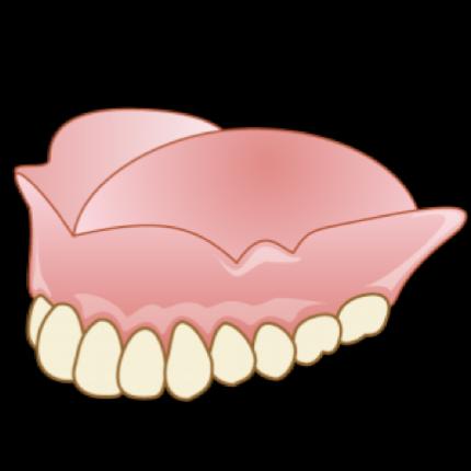 歯肉のイラスト